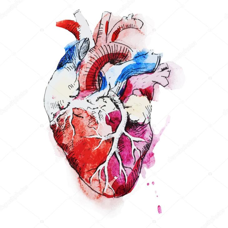 depositphotos_76871939-stock-illustration-watercolor-human-heart.jpg